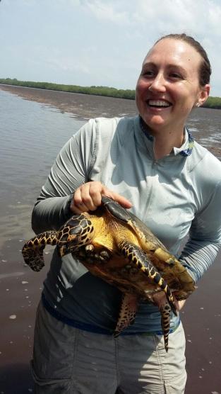turtle-joy